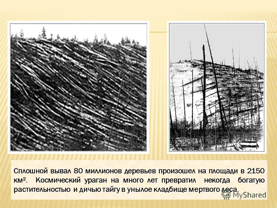 Сплошной вывал 80 миллионов деревьев произошел на площади в 2150 км². Космический ураган на много лет превратил некогда богатую растительностью и дичью тайгу в унылое кладбище мертвого леса.