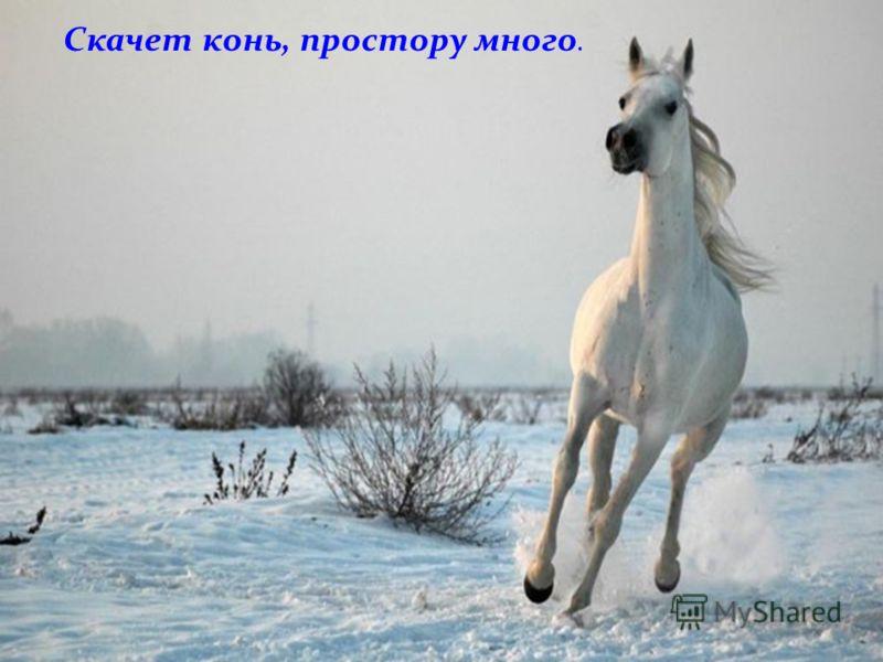 Скачет конь, простору много.