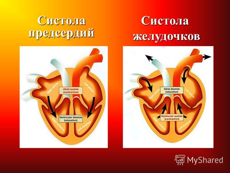 Систола предсердий Систолажелудочков