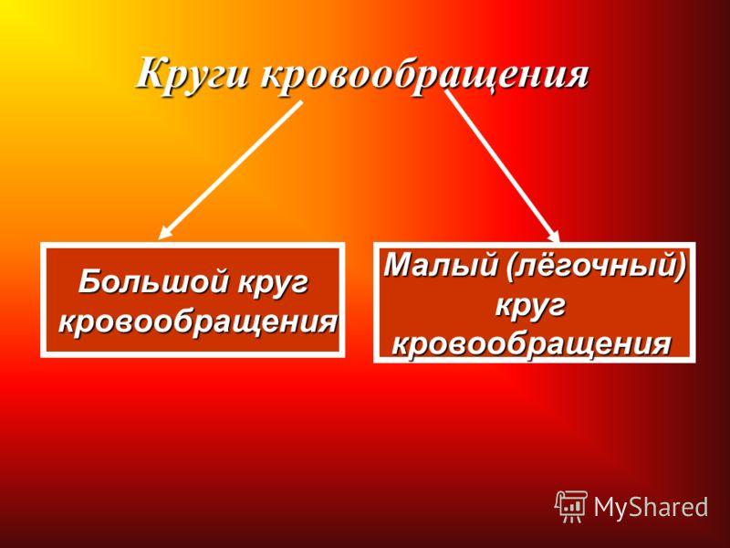 Круги кровообращения Большой круг кровообращения кровообращения Малый (лёгочный) кругкровообращения
