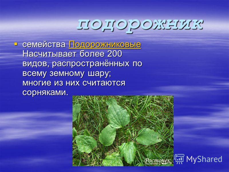 калина семейства Вересковые, объединяющий вечнозелёные стелющиеся кустарнички, растущие на болотах в Северном полушарии. семейства Вересковые, объединяющий вечнозелёные стелющиеся кустарнички, растущие на болотах в Северном полушарии.Вересковыевечноз