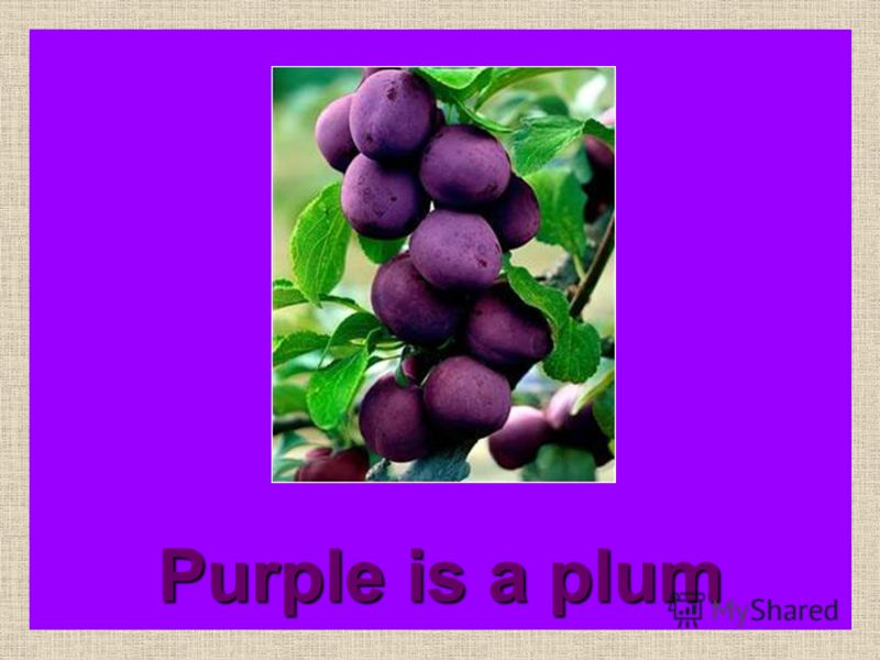 Purple is a grape