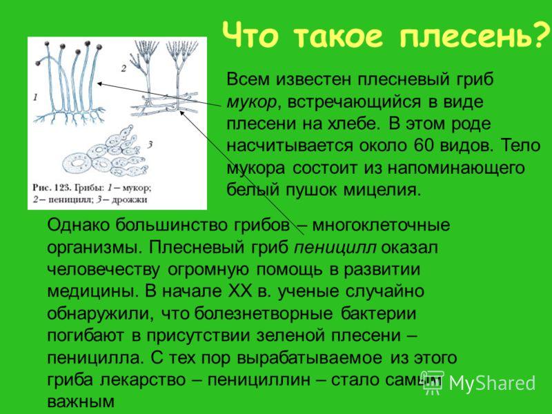 Что такое плесень? Всем известен плесневый гриб мукор, встречающийся в виде плесени на хлебе. В этом роде насчитывается около 60 видов. Тело мукора состоит из напоминающего белый пушок мицелия. Однако большинство грибов – многоклеточные организмы. Пл