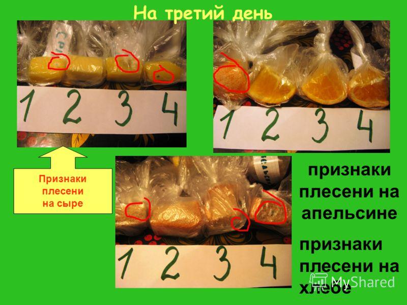признаки плесени на апельсине признаки плесени на хлебе На третий день Признаки плесени на сыре