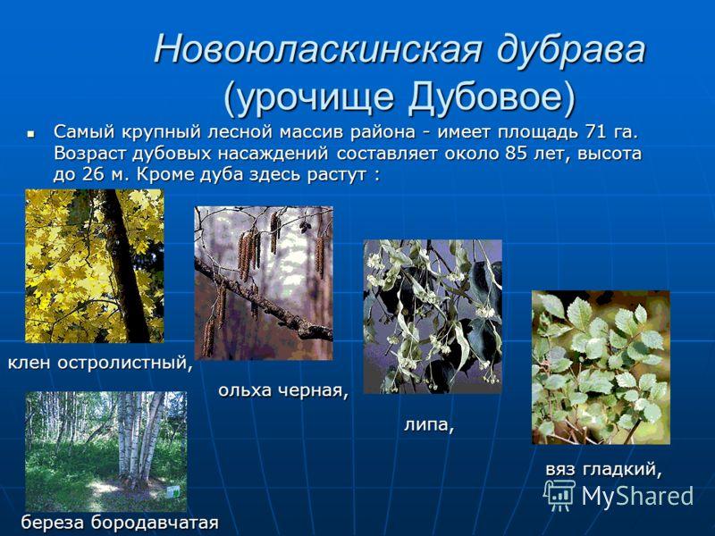 Новоюласкинская дубрава (урочище Дубовое) Самый крупный лесной массив района - имеет площадь 71 га. Возраст дубовых насаждений составляет около 85 лет, высота до 26 м. Кроме дуба здесь растут : Самый крупный лесной массив района - имеет площадь 71 га