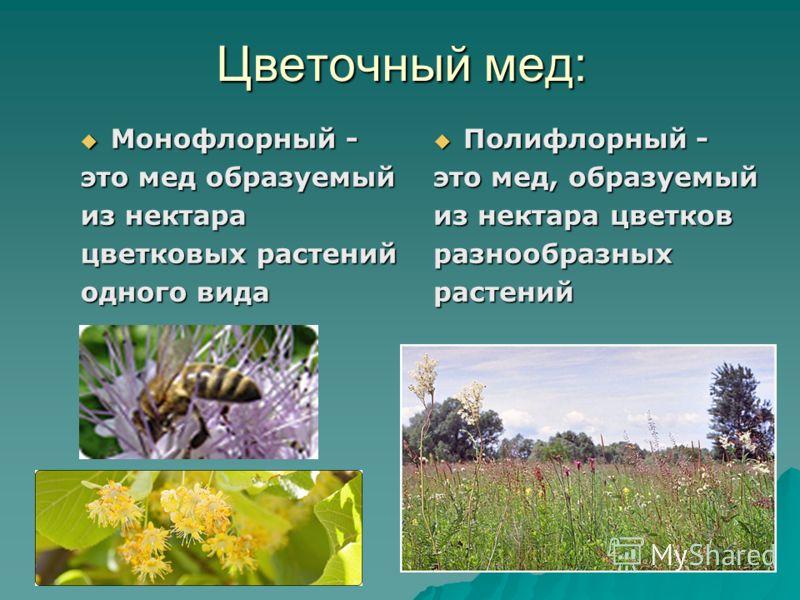 Цветочный мед: Монофлорный - Монофлорный - это мед образуемый из нектара цветковых растений одного вида Полифлорный - Полифлорный - это мед, образуемый из нектара цветков разнообразныхрастений