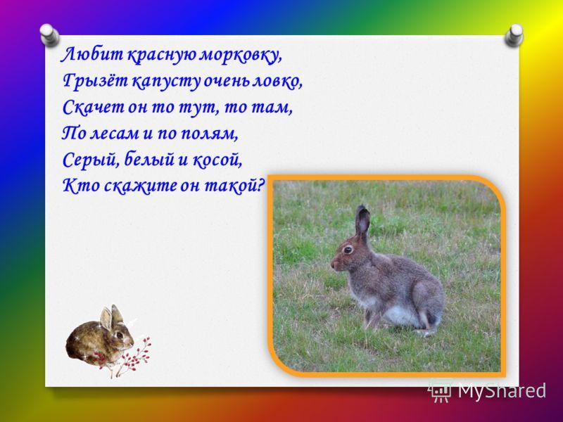 Любит красную морковку, Грызёт капусту очень ловко, Скачет он то тут, то там, По лесам и по полям, Серый, белый и косой, Кто скажите он такой?