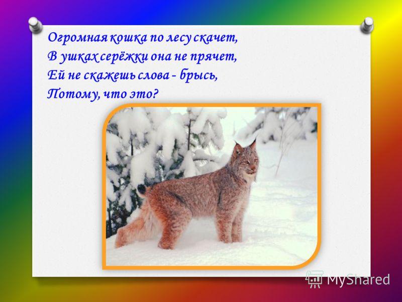 Огромная кошка по лесу скачет, В ушках серёжки она не прячет, Ей не скажешь слова - брысь, Потому, что это?
