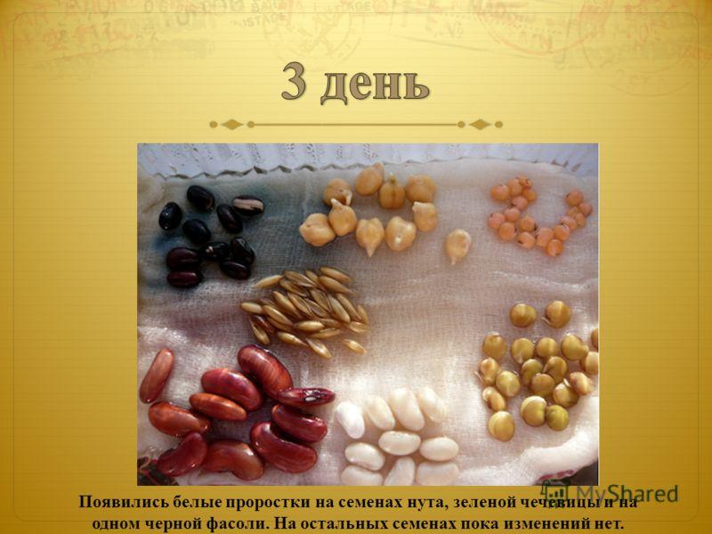 Появились белые проростки на семенах нута, зеленой чечевицы и на одном черной фасоли. На остальных семенах пока изменений нет.