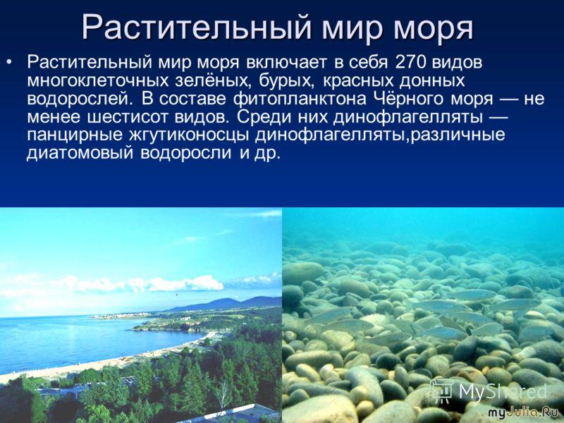 Растительный мир моря Растительный мир моря включает в себя 270 видов многоклеточных зелёных, бурых, красных донных водорослей. В составе фитопланктона Чёрного моря не менее шестисот видов. Среди них динофлагелляты панцирные жгутиконосцы динофлагелля