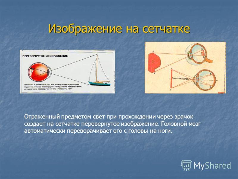 Изображение на сетчатке Отраженный предметом свет при прохождении через зрачок создает на сетчатке перевернутое изображение. Головной мозг автоматически переворачивает его с головы на ноги.