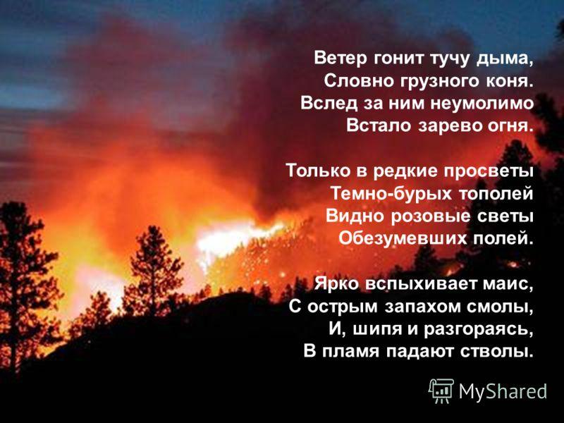 Ветер гонит тучу дыма, Словно грузного коня. Вслед за ним неумолимо Встало зарево огня. Только в редкие просветы Темно-бурых тополей Видно розовые светы Обезумевших полей. Ярко вспыхивает маис, С острым запахом смолы, И, шипя и разгораясь, В пламя па