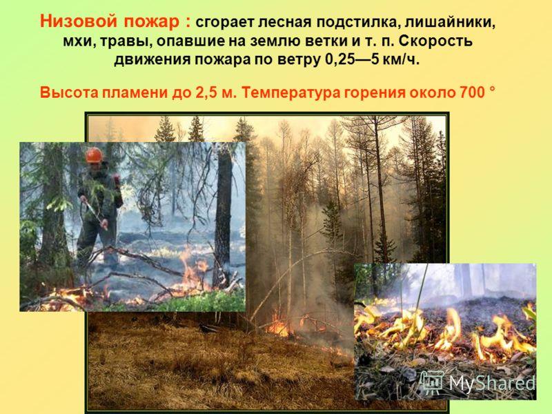 Низовой пожар : сгорает лесная подстилка, лишайники, мхи, травы, опавшие на землю ветки и т. п. Скорость движения пожара по ветру 0,255 км/ч. Высота пламени до 2,5 м. Температура горения около 700 °