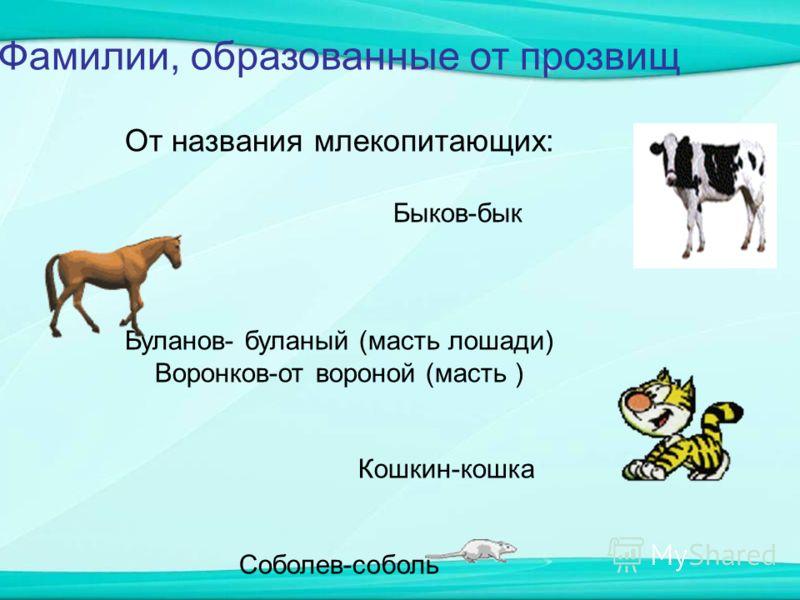 Фамилии, образованные от прозвищ От названия млекопитающих: Быков-бык Буланов- буланый (масть лошади) Воронков-от вороной (масть ) Кошкин-кошка Соболев-соболь