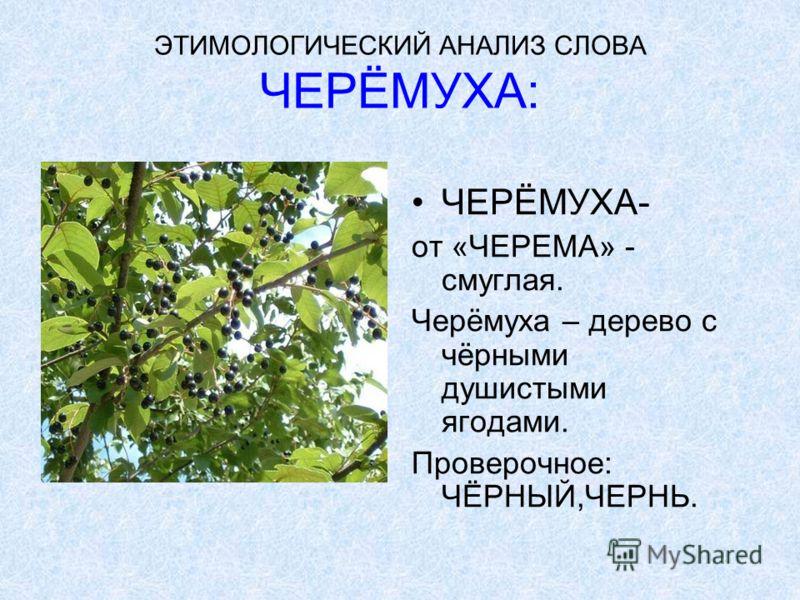 ЭТИМОЛОГИЧЕСКИЙ АНАЛИЗ СЛОВА УРОЖАЙ: УРОЖАЙ- от РОД, количество уродившегося хлеба или других плодов, растений. Проверочное: РОД.