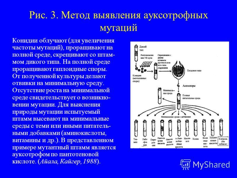Рис. 3. Метод выявления ауксотрофных мутаций Конидии облучают (для увеличения частоты мутаций), проращивают на полной среде, скрещивают со штам- мом дикого типа. На полной среде проращивают гаплоидные споры. От полученной культуры делают отвивки на м