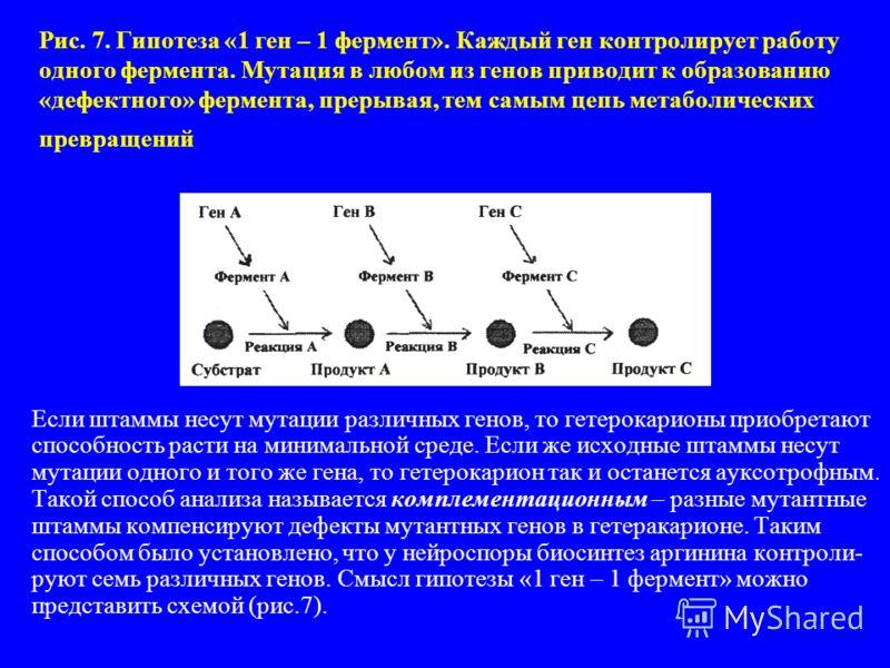 Рис. 7. Гипотеза «1 ген – 1 фермент». Каждый ген контролирует работу одного фермента. Мутация в любом из генов приводит к образованию «дефектного» фермента, прерывая, тем самым цепь метаболических превращений Если штаммы несут мутации различных генов