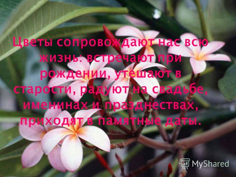 Цветы сопровождают нас всю жизнь: встречают при рождении, утешают в старости, радуют на свадьбе, именинах и празднествах, приходят в памятные даты.