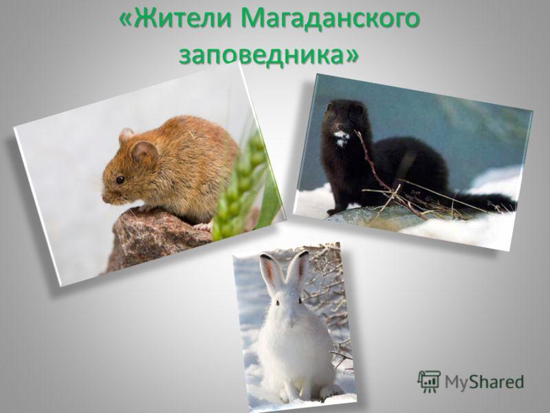 «Жители Магаданского заповедника»