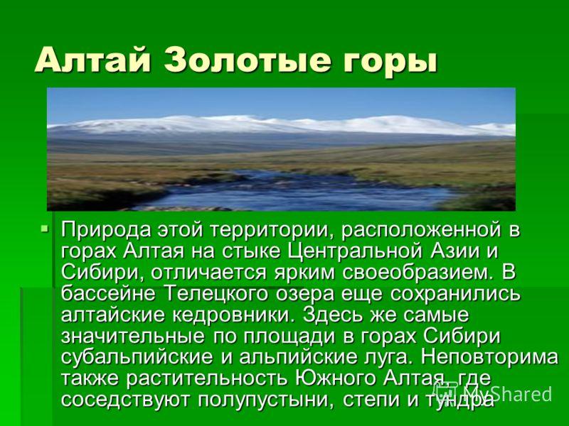 Алтай Золотые горы Природа этой территории, расположенной в горах Алтая на стыке Центральной Азии и Сибири, отличается ярким своеобразием. В бассейне Телецкого озера еще сохранились алтайские кедровники. Здесь же самые значительные по площади в горах