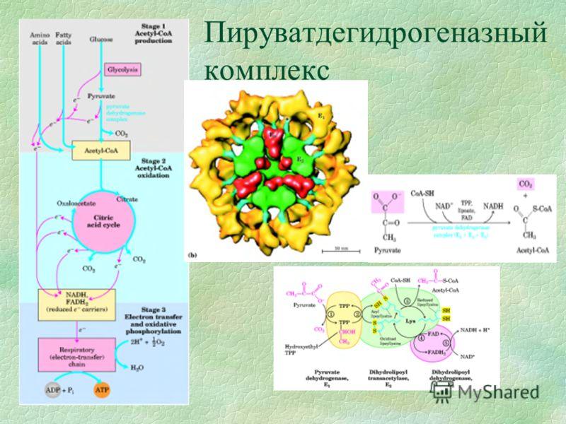 Пируватдегидрогеназный комплекс