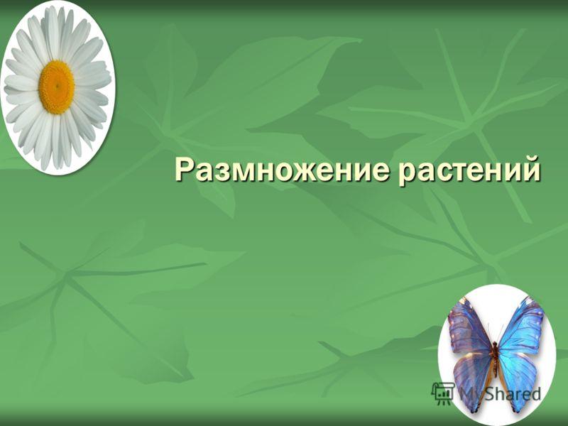 Размножение растений
