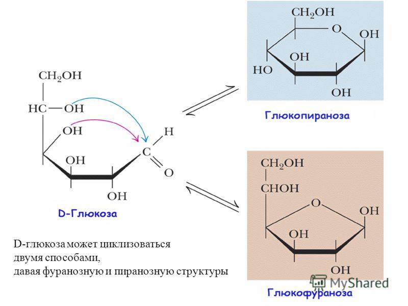 D-глюкоза может циклизоваться двумя способами, давая фуранозную и пиранозную структуры