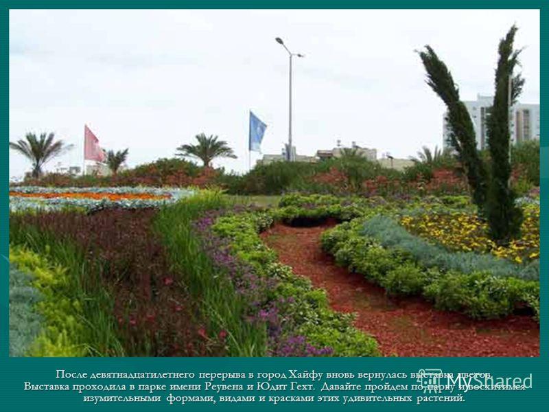 После девятнадцатилетнего перерыва в город Хайфу вновь вернулась выставка цветов. Выставка проходила в парке имени Реувена и Юдит Гехт. Давайте пройдем по парку и восхитимся изумительными формами, видами и красками этих удивительных растений.