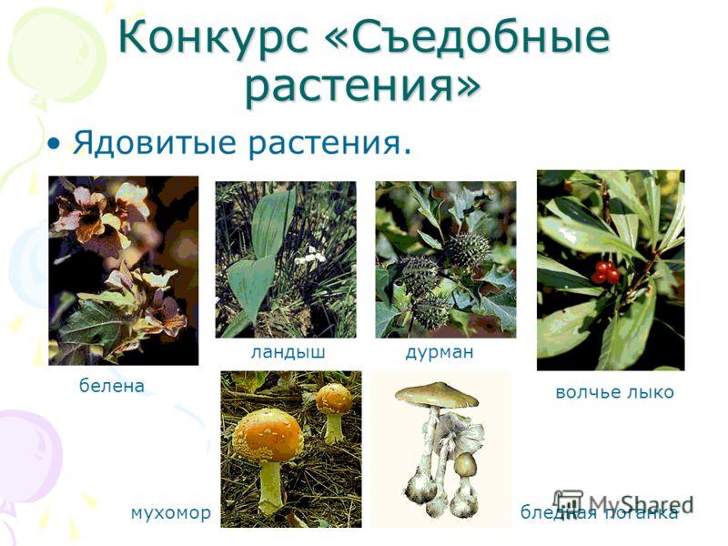 Скачать книгу съедобные растения