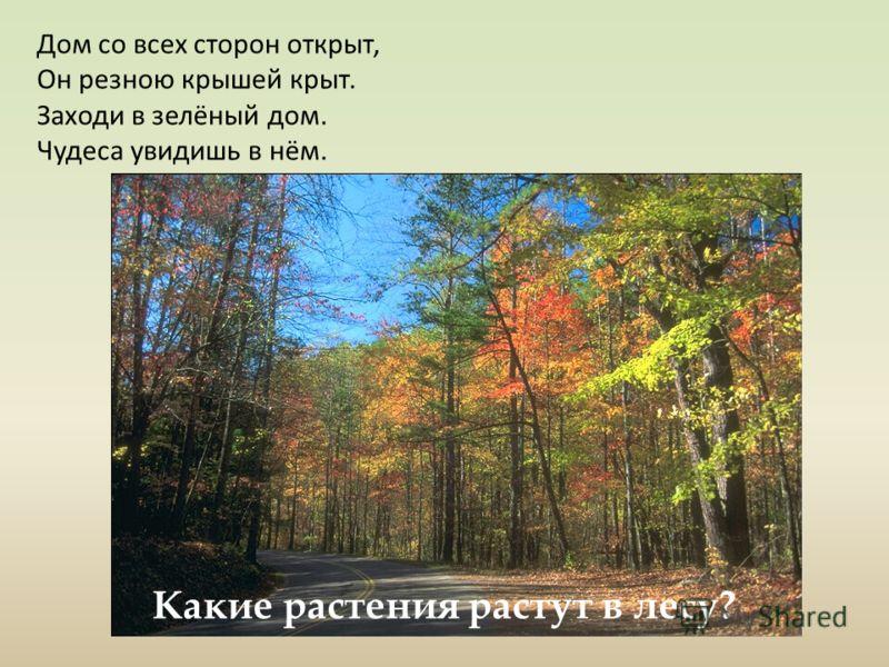 Дом со всех сторон открыт, Он резною крышей крыт. Заходи в зелёный дом. Чудеса увидишь в нём. Какие растения растут в лесу?