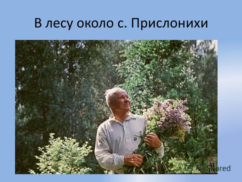 В лесу около с. Прислонихи