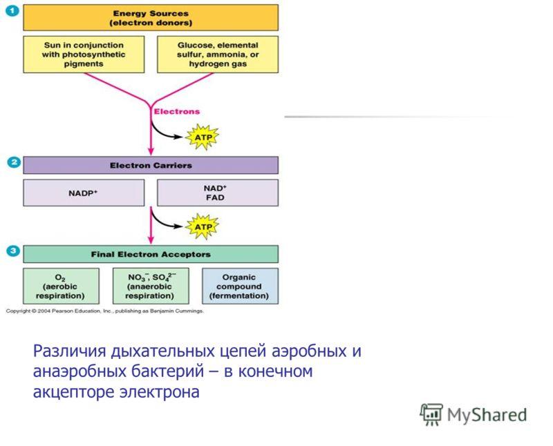 Различия дыхательных цепей аэробных и анаэробных бактерий – в конечном акцепторе электрона