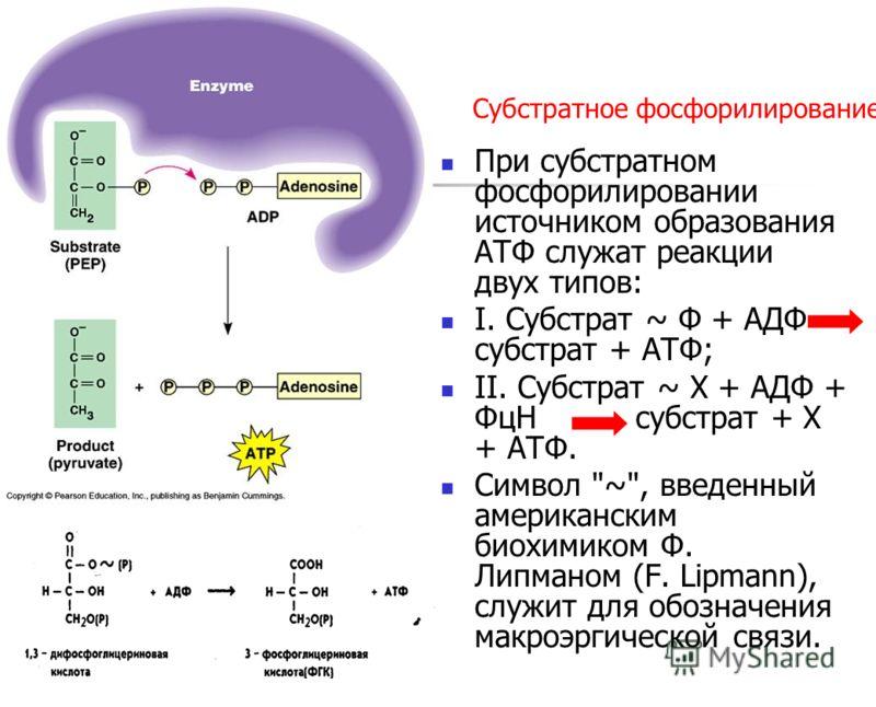 Субстратное фосфорилирование При субстратном фосфорилировании источником образования АТФ служат реакции двух типов: I. Субстрат ~ Ф + АДФ субстрат + АТФ; II. Субстрат ~ X + АДФ + ФцН субстрат + Х + АТФ. Символ