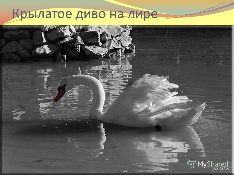 Крылатое диво на лире