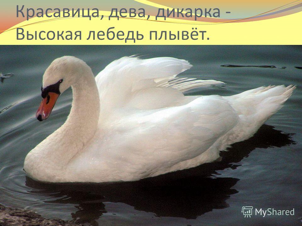 Красавица, дева, дикарка - Высокая лебедь плывёт.