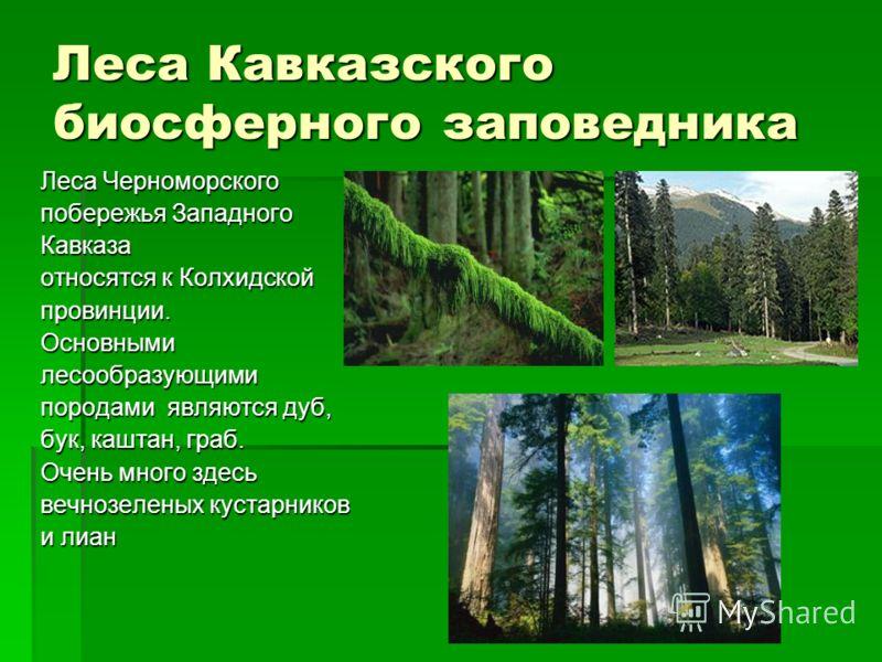 Альпийские луга Подобно зелёному изумруду в тёмно- хвойной оправе пихтовых лесов возвышаются субальпийские и альпийские лугов. Площадь этих лугов- 56 тысяч гектаров.
