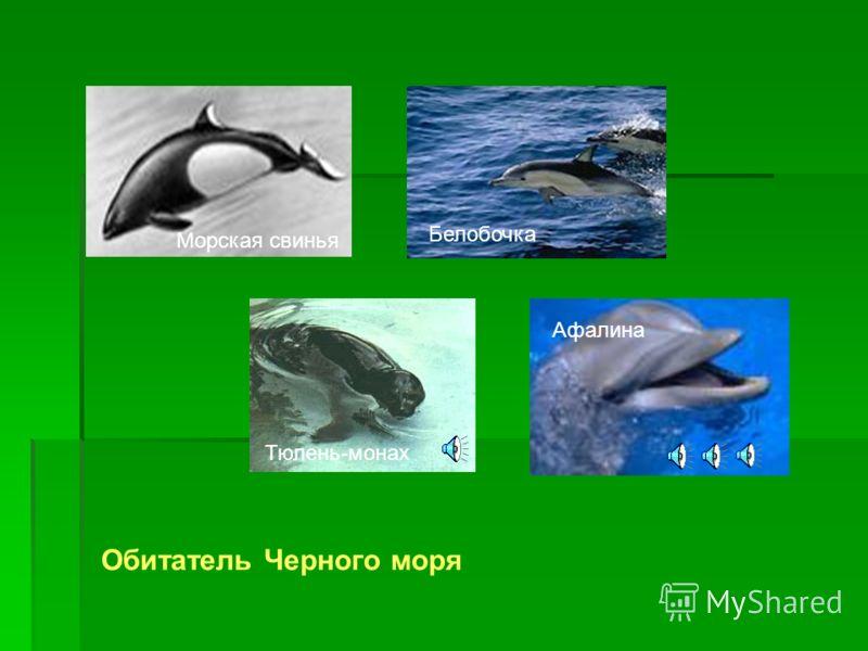 Горяче- Ключевской, Туапсинский, Головинский заказники