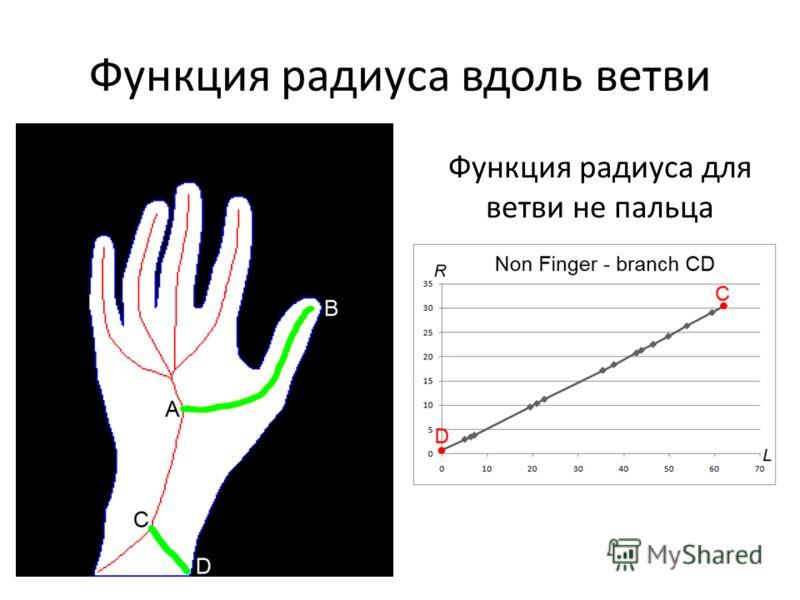 Функция радиуса вдоль ветви Функция радиуса для ветви не пальца