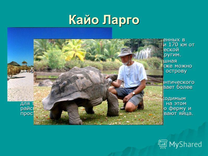 Кайо Ларго Кайо Ларго - небольшая группа островов, расположенных в самом сердце Карибского моря, в 177 км от Гаваны и 170 км от Варадеро. Он служит убежищем сотням птиц тропической фауны: фламинго, колибри, серой цапле и многим другим. Кайо Ларго - н