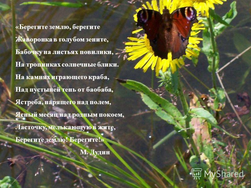 «Берегите землю, берегите Жаворонка в голубом зените, Бабочку на листьях повилики, На тропинках солнечные блики. На камнях играющего краба, Над пустыней тень от баобаба, Ястреба, парящего над полем, Ясный месяц над родным покоем, Ласточку, мелькающую