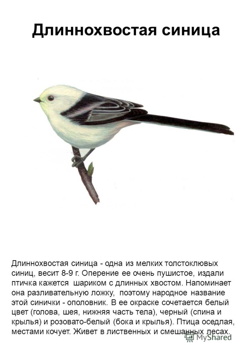 черная птица белые крылья слушать