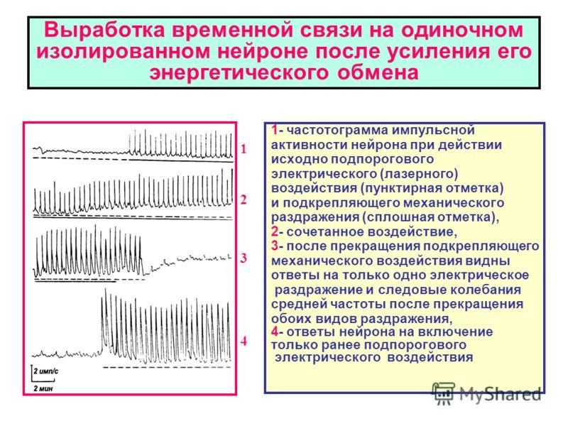 Выработка временной связи на одиночном изолированном нейроне после усиления его энергетического обмена 1- частотограмма импульсной активности нейрона при действии исходно подпорогового электрического (лазерного) воздействия (пунктирная отметка) и под