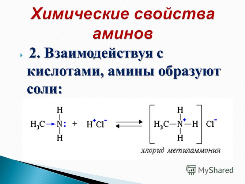 2. Взаимодействуя с кислотами, амины образуют соли: