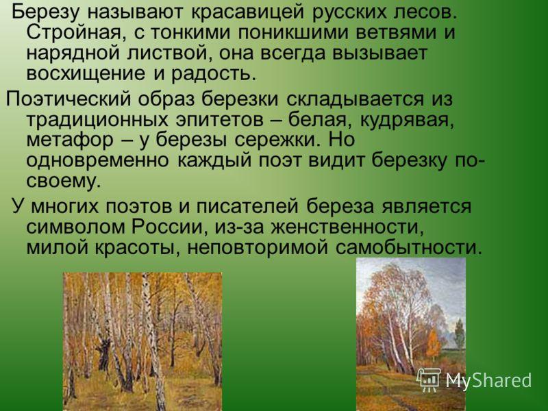 Березу называют красавицей русских лесов. Стройная, с тонкими поникшими ветвями и нарядной листвой, она всегда вызывает восхищение и радость. Поэтический образ березки складывается из традиционных эпитетов – белая, кудрявая, метафор – у березы сережк