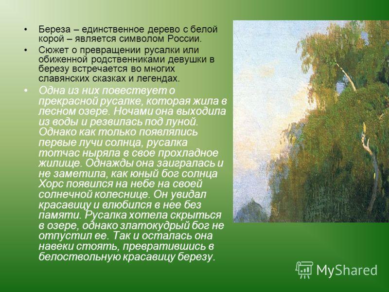 Береза – единственное дерево с белой корой – является символом России. Сюжет о превращении русалки или обиженной родственниками девушки в березу встречается во многих славянских сказках и легендах. Одна из них повествует о прекрасной русалке, которая