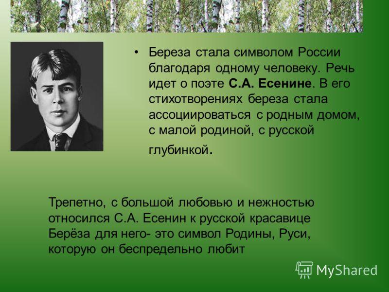 Береза стала символом России благодаря одному человеку. Речь идет о поэте С.А. Есенине. В его стихотворениях береза стала ассоциироваться с родным домом, с малой родиной, с русской глубинкой. Трепетно, с большой любовью и нежностью относился С.А. Есе