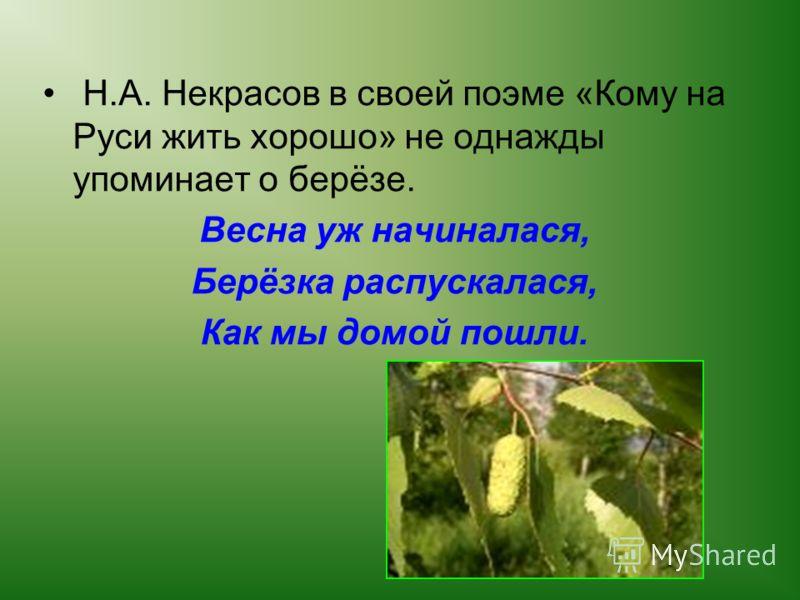 Н.А. Некрасов в своей поэме «Кому на Руси жить хорошо» не однажды упоминает о берёзе. Весна уж начиналася, Берёзка распускалася, Как мы домой пошли.