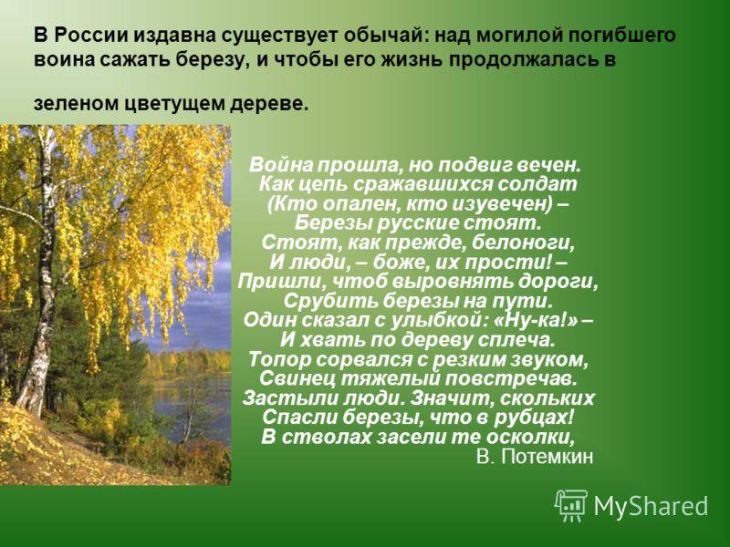В России издавна существует обычай: над могилой погибшего воина сажать березу, и чтобы его жизнь продолжалась в зеленом цветущем дереве. Война прошла, но подвиг вечен. Как цепь сражавшихся солдат (Кто опален, кто изувечен) – Березы русские стоят. Сто