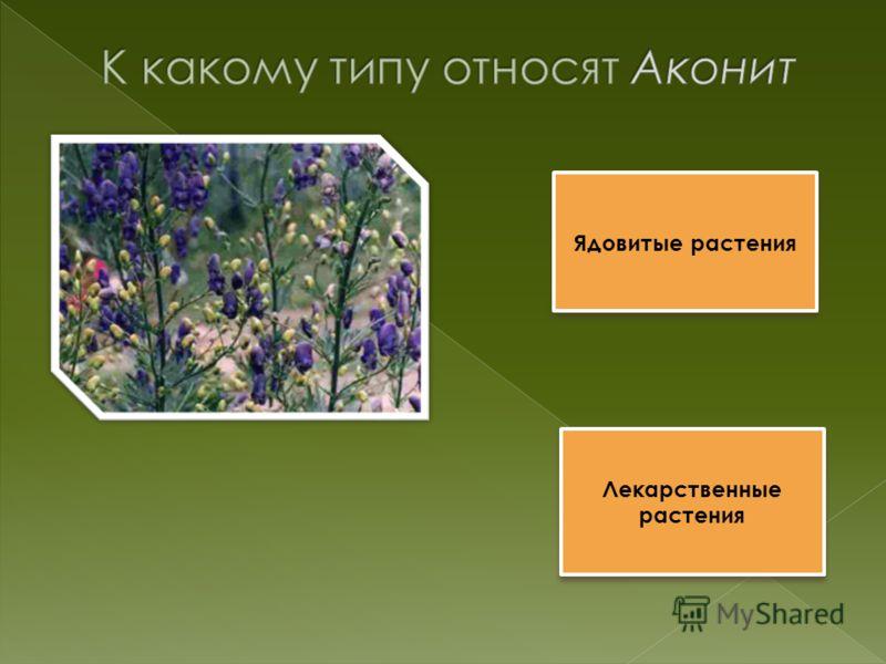 Ядовитые растения Лекарственные растения