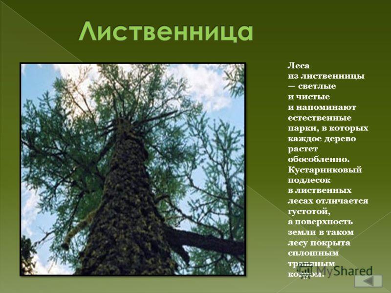 Леса из лиственницы светлые и чистые и напоминают естественные парки, в которых каждое дерево растет обособленно. Кустарниковый подлесок в лиственных лесах отличается густотой, а поверхность земли в таком лесу покрыта сплошным травяным ковром.